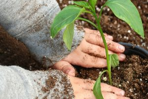 A Beginners Guide to Gardening with Kids